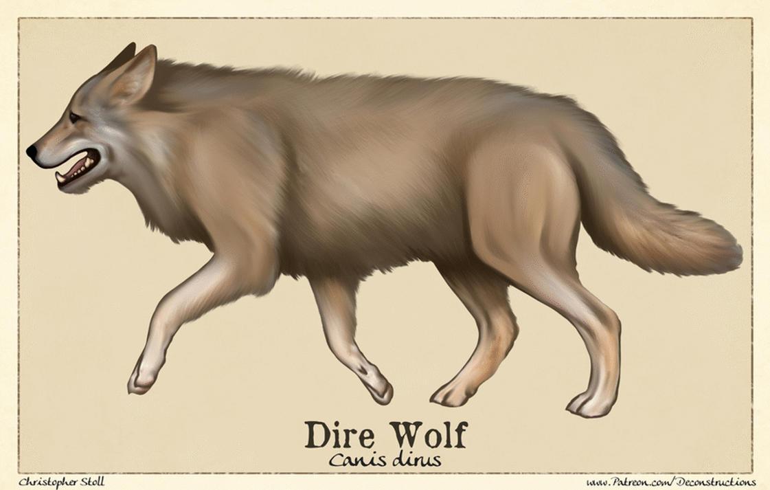 Dire Wolf Anatomy by Christopher-Stoll on DeviantArt