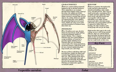 Zubat Anatomy- Pokedex Entry by Christopher-Stoll