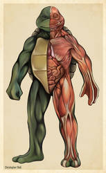 Teenage Mutant Ninja Turtle Anatomy Deconstruction by Christopher-Stoll
