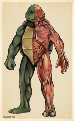 Teenage Mutant Ninja Turtle Anatomy Deconstruction