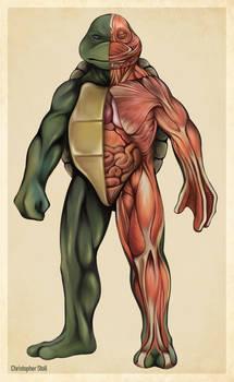 Teenage Mutant Ninja Turtle Anatomy Deconstruction