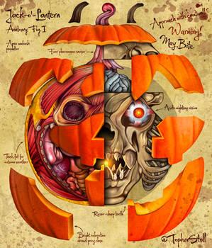 Jack o' Lantern Anatomy - Halloween Art