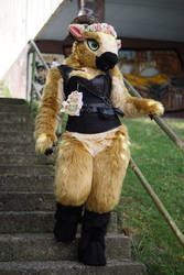 Stairs? It's not a problem for my hooves