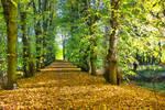 Autumn path... 2020