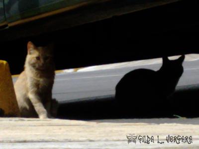 Luz y sombra by Cotton-cat