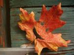 Jack-O-Leaf by Lin-Z89