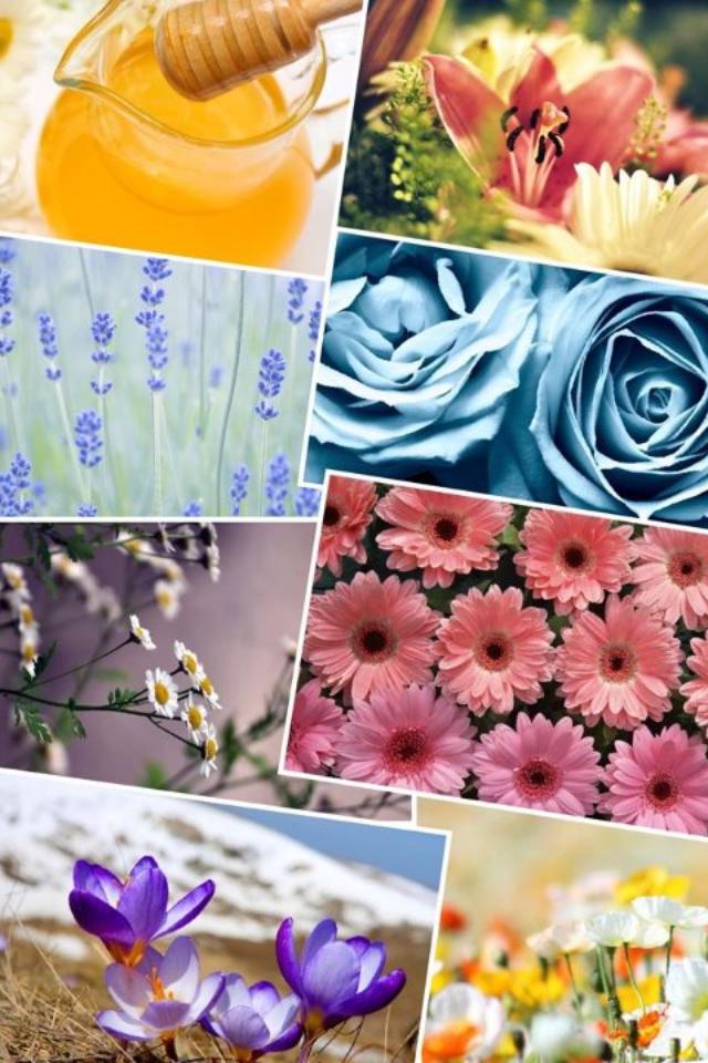 Floral Collage 1 by SasuSaku-NaruHina01