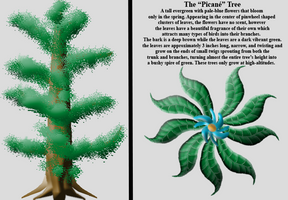 The Picane tree by C-Hillman