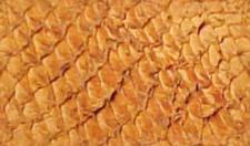 Walleye Leather by jekylnhyde