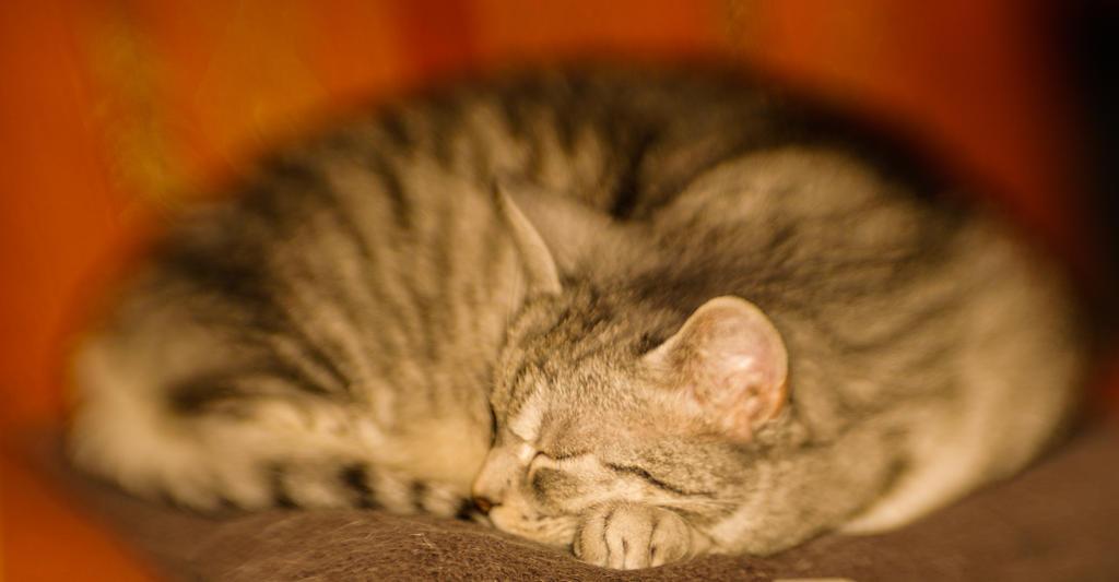 Sleeping Felicia by GreenShadow23