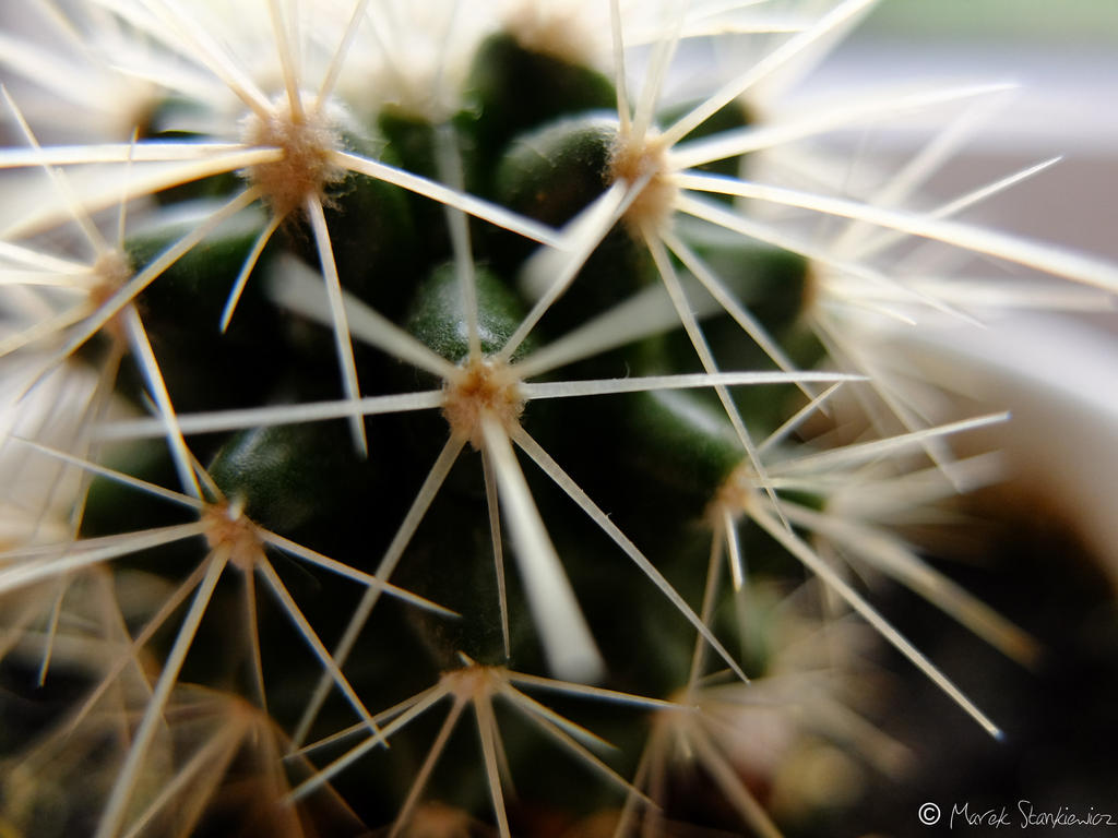 Cactus by GreenShadow23