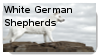 White German Shepherd Stamp by WildWarriorWolf