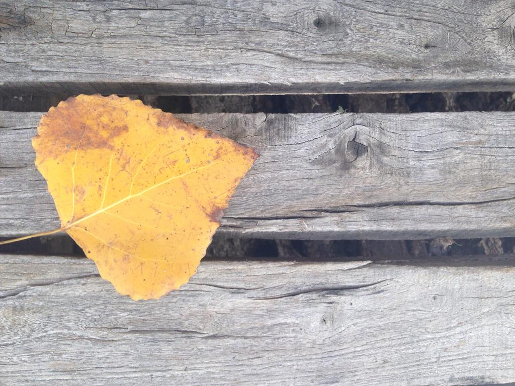 Leaf by Follin