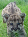 Pouncing Baby