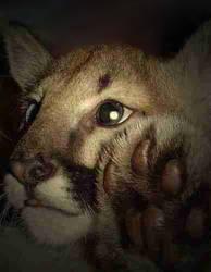 More Cougar Boy