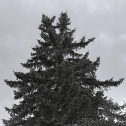 Tree: Camera test