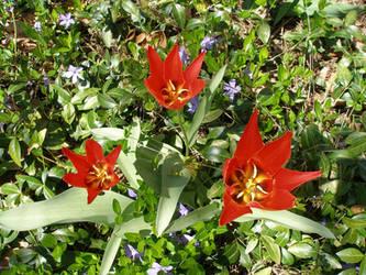 Triplets in the Garden!