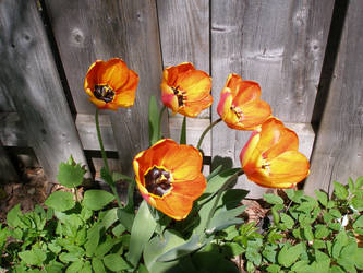 Spring on the old fence!