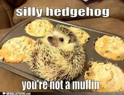 Silly Hedgehog by GalaxyCookie