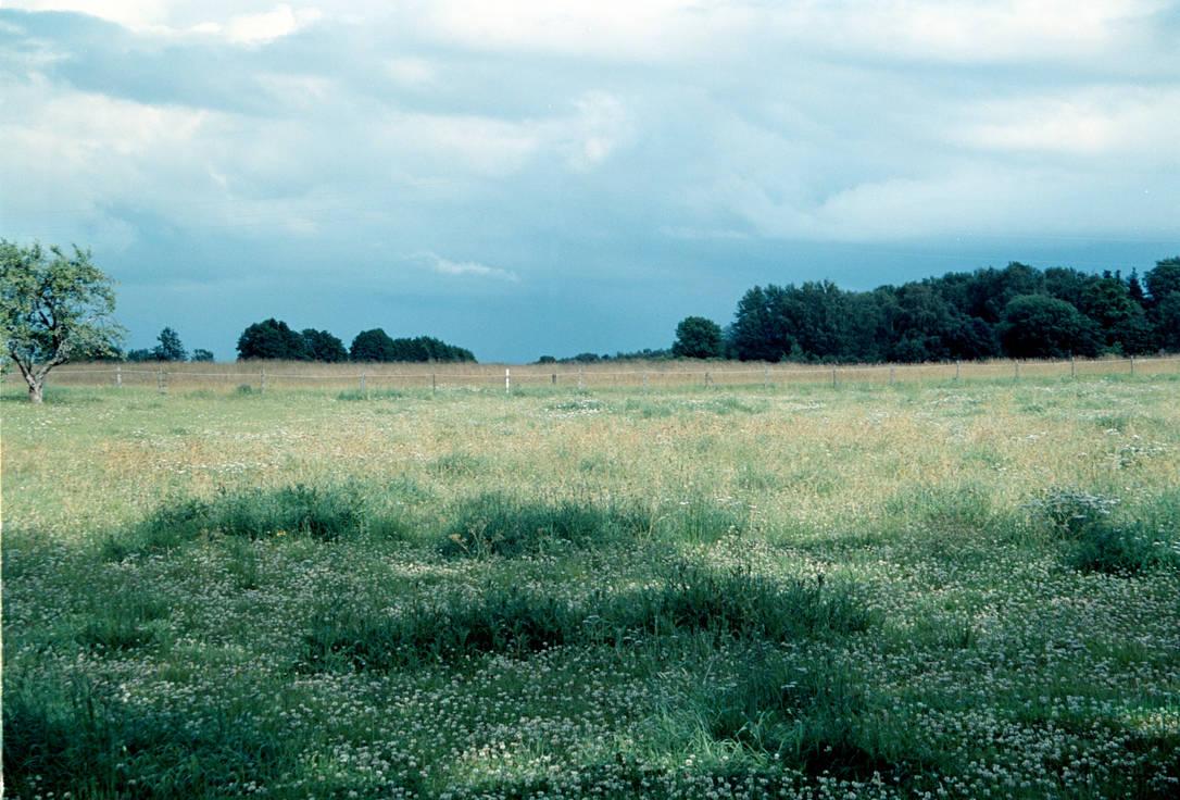Field stock 01 by MacKenzei-stock