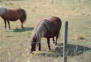 Animal stock 03 by MacKenzei-stock