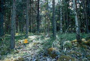 Tree stock 04 by MacKenzei-stock