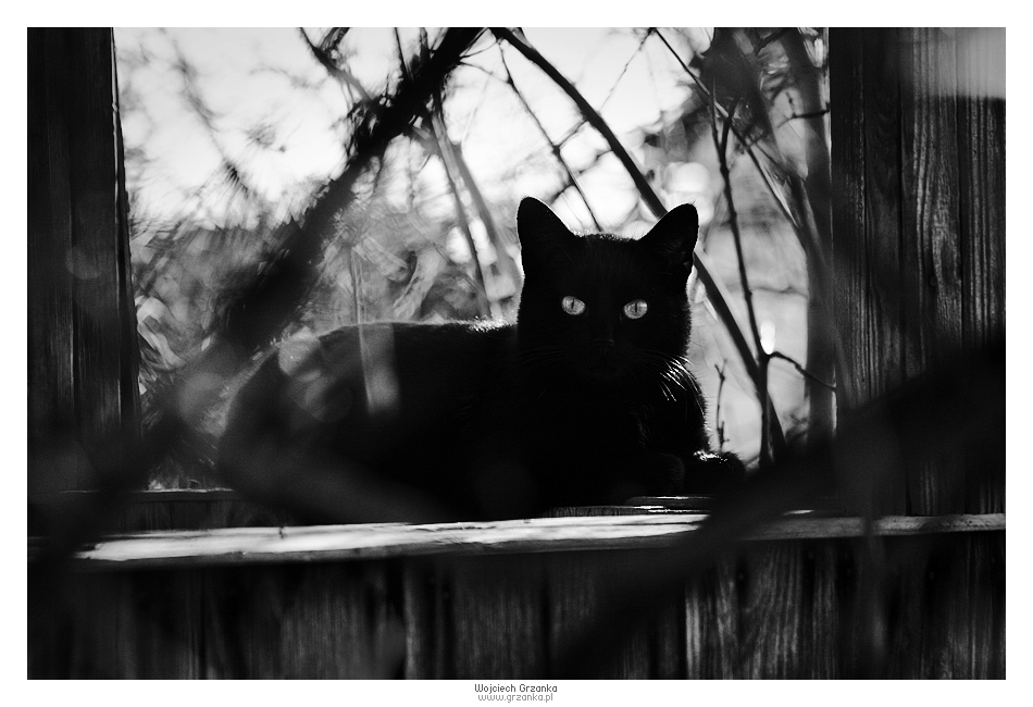 Shadow Cat by voogee