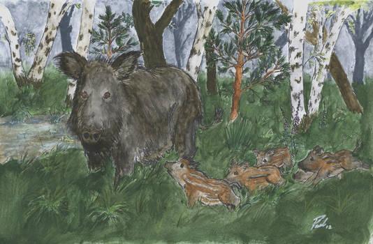 Wild sow with piglets (Bache mit Frischlingen)