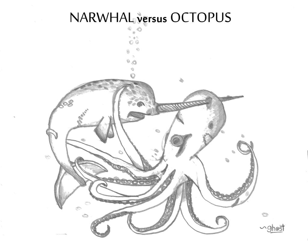 narwhal vs octopus by hawkeyehunter narwhal vs octopus by hawkeyehunter