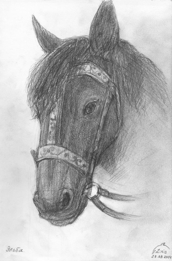 Horse Sketch by Liris-san