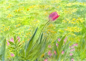 The Tulip among Dandelions