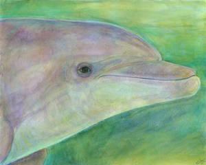 Tursiops truncatus