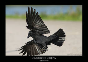 CROW.2 by THEDOC4