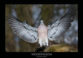 PIGEON.2 by THEDOC4