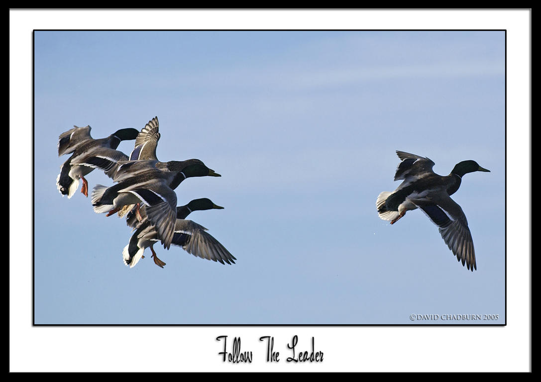 Follow the leader by THEDOC4