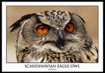Scandinavian Eagle Owl