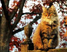 autumn feline by jupiterjunky