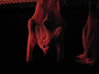 Bats by snowcone666