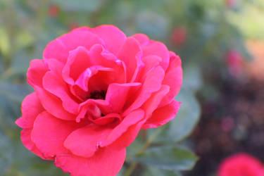 Floradora by Darklordd