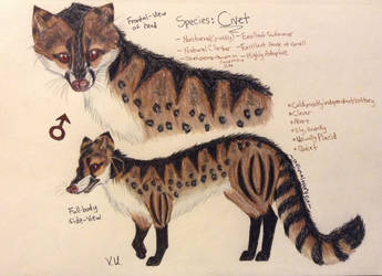 Civet|Design|Contest Entry|Now my oc