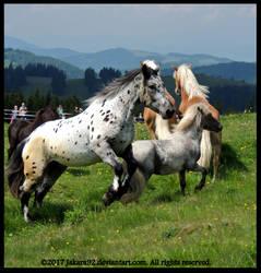 Noriker and Shetty Stallion