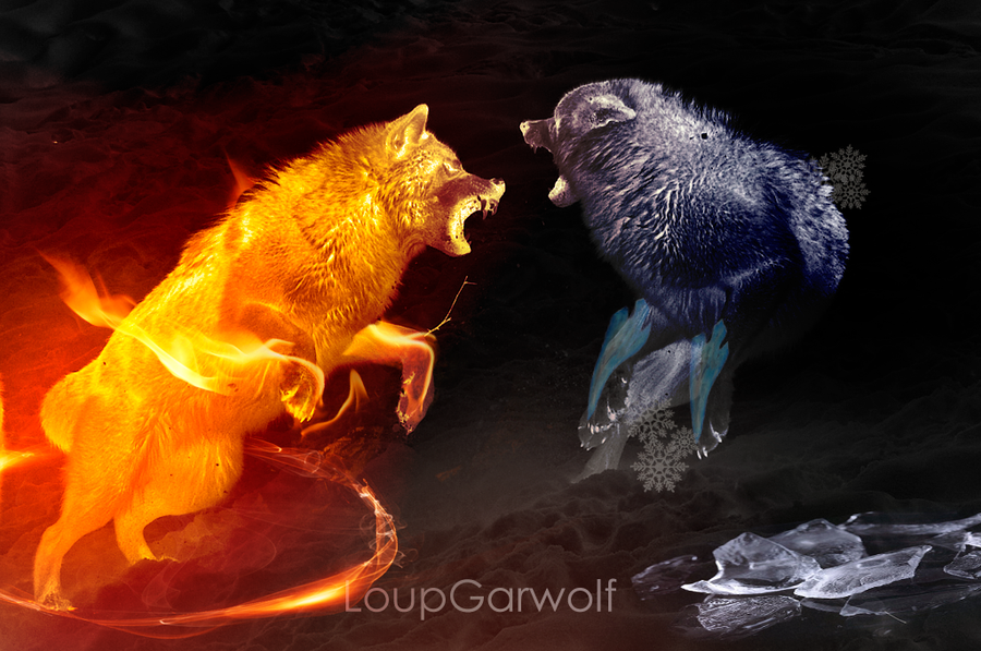 Wolves Fight V1 by LoupGarwolf on DeviantArt