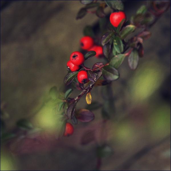 christmas dreams by orbatid