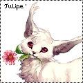 Avatar chien by Tulipefire