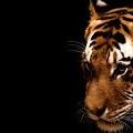 Avatar Tigre by Tulipefire