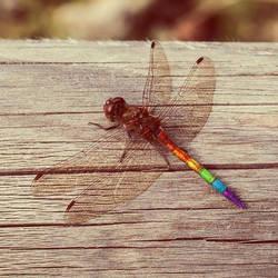 Dragonfly Revolution