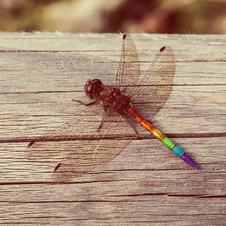 Dragonfly Revolution by Jonas-Daehnert