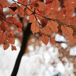 Leaves us
