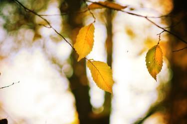 Herbst. Zeit lose