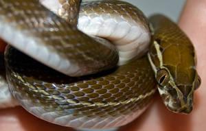 Snakeskin close up